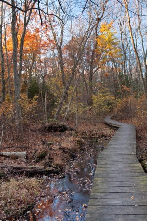 Larsen Sanctuary trail