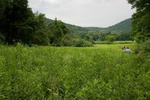 Science and Conservation staff survey a managed grassland on our Pratt Valley Preserve in Bridgewater