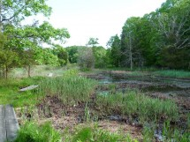 A wetland on one of the Darien Land Trust properties where wildlife and habitat studies are carried out in cooperation with Connecticut Audubon Society