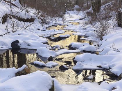 Hampton Brook at Trail Wood 0953