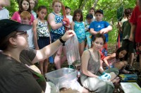 Yale University researchers work with summer campers to study amphibian disease - by Twan Leenders