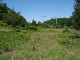 Power lines like these in eastern Connecticut provide habitat for Chestnut-Sided Warblers, Prairie Warblers, Brown Thrashers and other declining species. Photo Copyright Twan Leenders for Connecticut Audubon Society