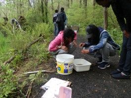Environmental sciences students from Harding High in Bridgeport examine specimens from a swamp along the Chiboucas Trail at our Larsen Sanctuary.