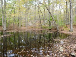 Core forests, which include important habitat like this vernal pool, are under threat in Connecticut. Connecticut Audubon photo by Scott Kruitbosch.
