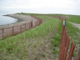 Man-made dunes at Stratford Point are designed to protect the area from erosion caused by storms. Photo courtesy of Prof. Mark Beekey, Sacred Heart University