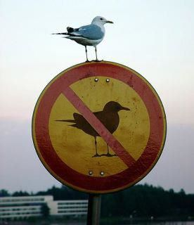 bird on a sign