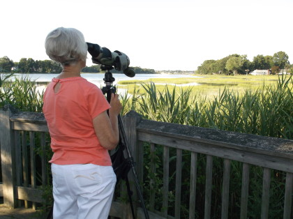 Carol Dunn, one of Osprey Nation's stalwart stewards, observes a nest at Gulf Pond in Milford. Photo by Susan Doherty.