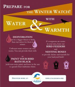 winter-bird-infograph