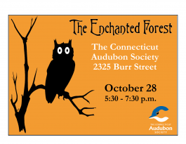 2016 Enchanted Forest