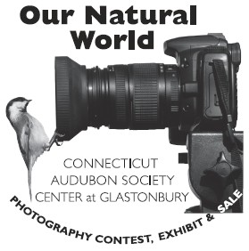 Photo Contest Logo (pic & text)