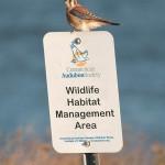American Kestrel on Connecticut Audubon Society sign