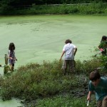 Summer campers help our research by catching lots of frogs and salamanders at the Larsen sanctuary in Fairfield