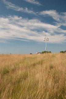 Stratford Point grassland -0286 - by Twan Leenders