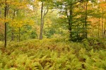 Croft Preserve forest
