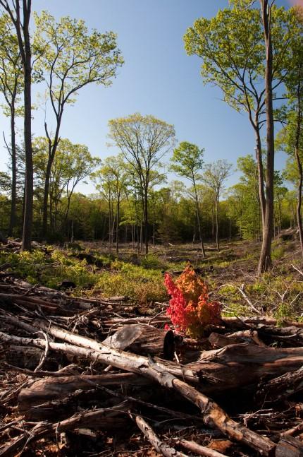 Croft Preserve clearing regeneration habitat forest-0901-by Twan Leenders