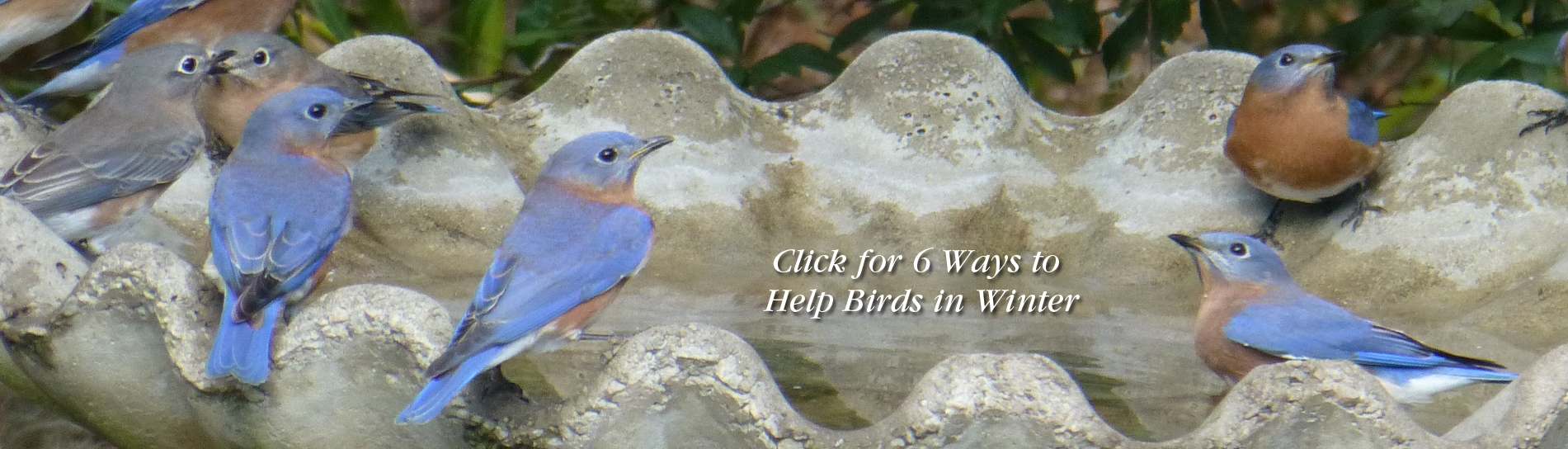 6 Ways to Help Birds in Winter