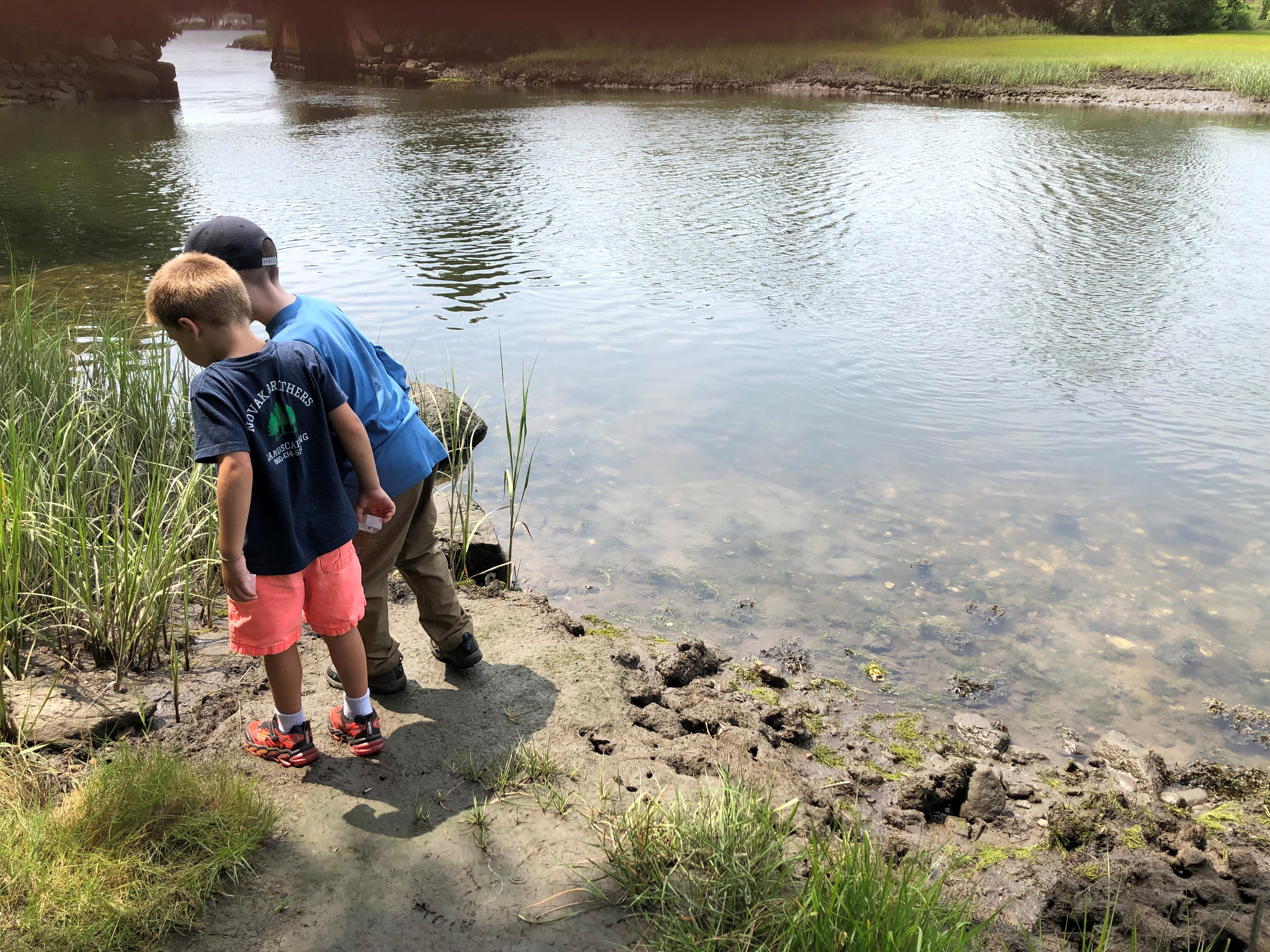 looking for fiddler crabs