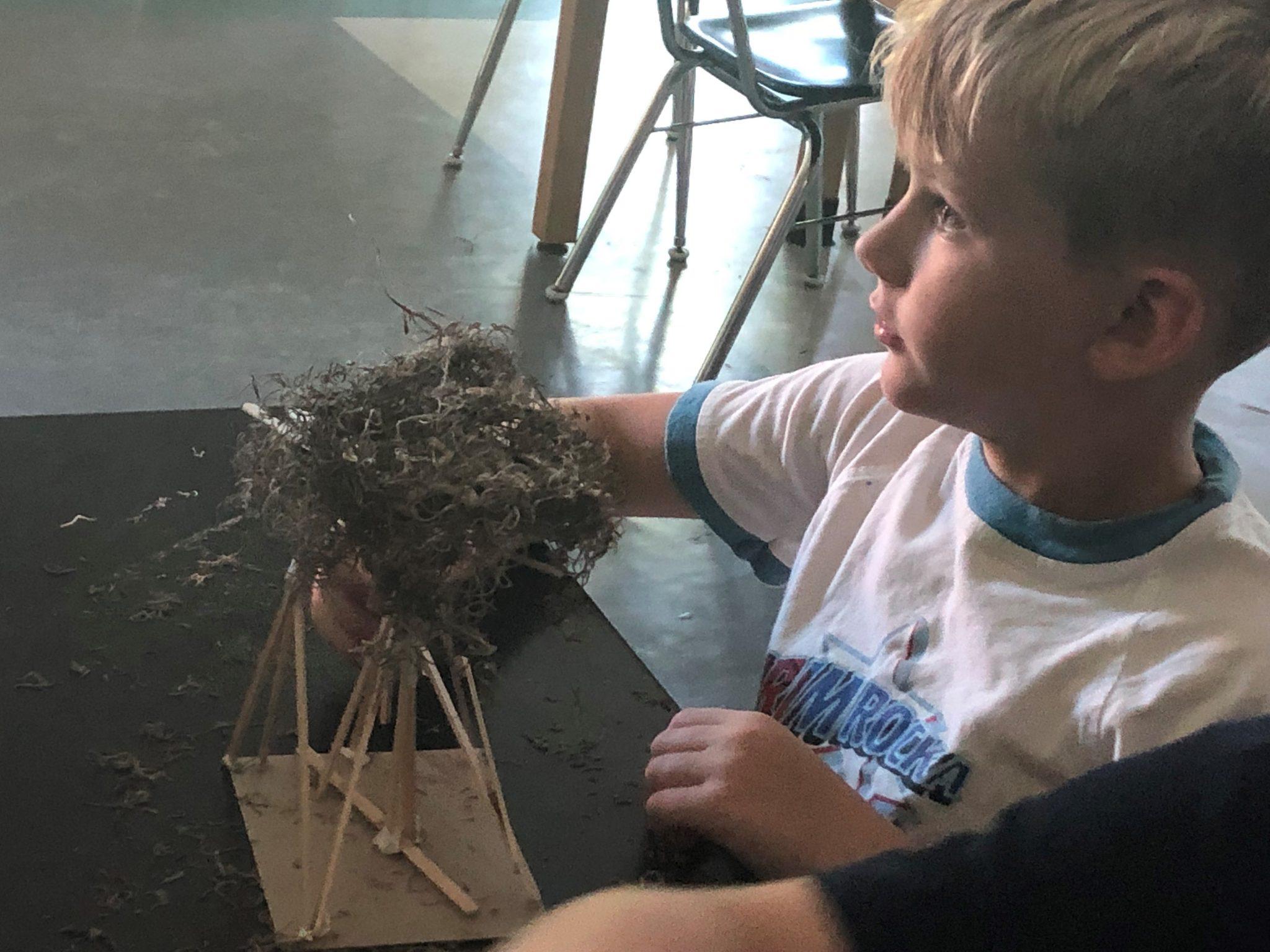 osprey nest building 2