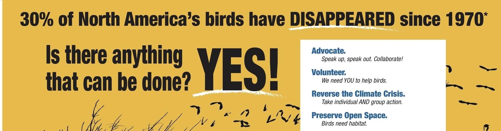 savingbirdsposter_36x24-final-banner