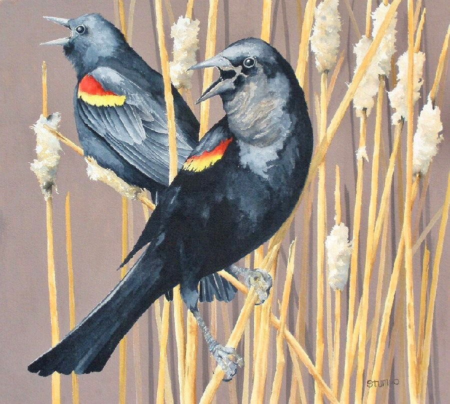 Cawing, Red-winged Blackbird