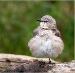 Third Prize Birds – Sandy Schill – Copy