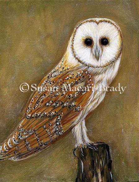 BARN OWL_©Susan Macari-Brady_448x588