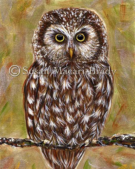 BOREAL OWL_©Susan Macari-Brady_470x588