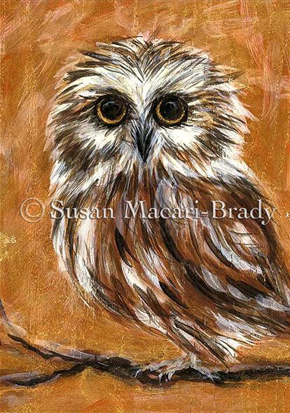SAW WHET OWL_©Susan Macari-Brady_414x588