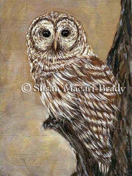 barred owl_©Susan Macari-Brady_443x588